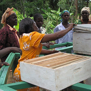 Agriculture and Apiculture